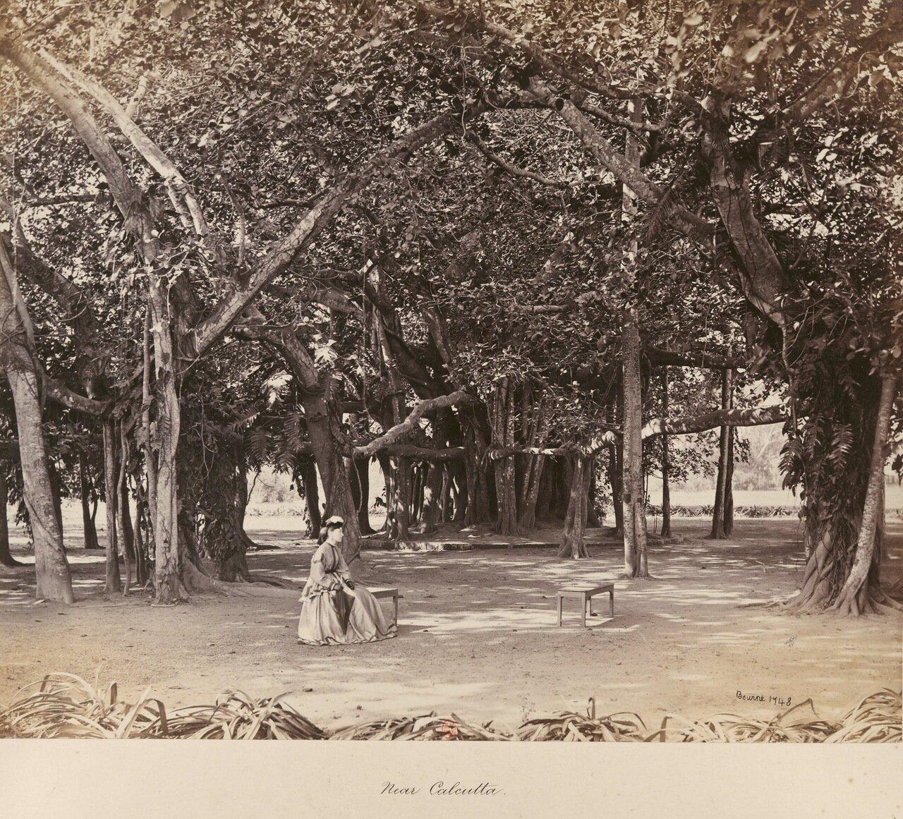 В окрестностях Калькутты