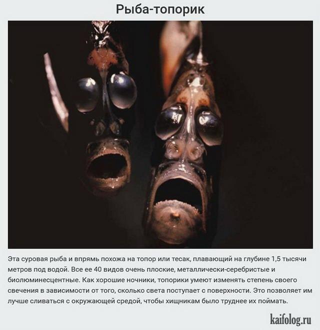 Марианская впадина и её обитатели (20 фото)
