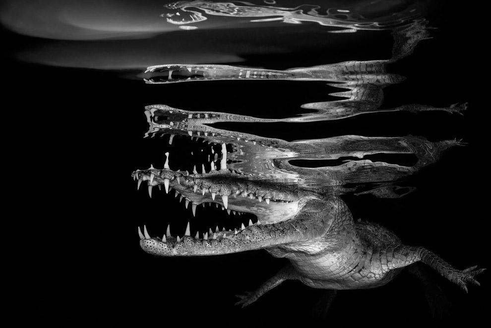 Крокодил на Кубе