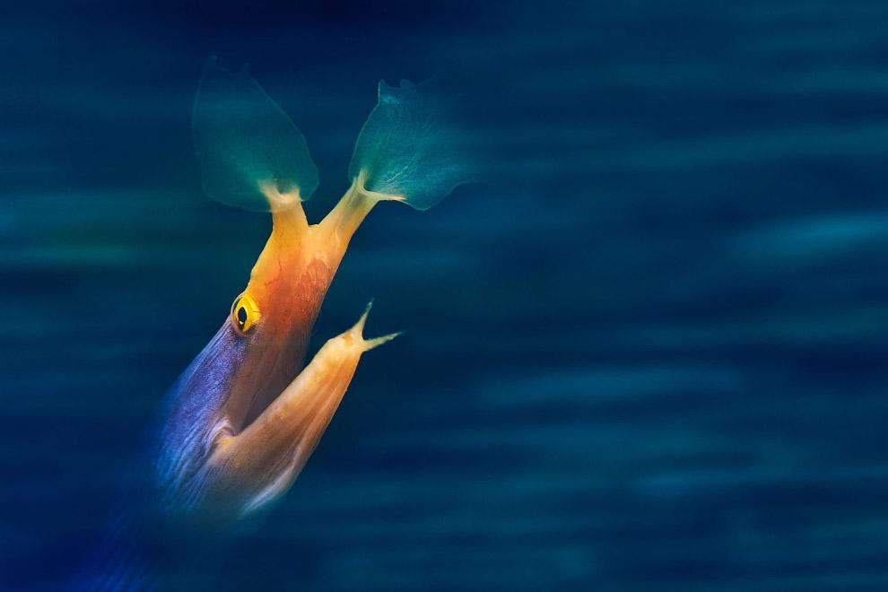 То ли рыба, то ли призрак
