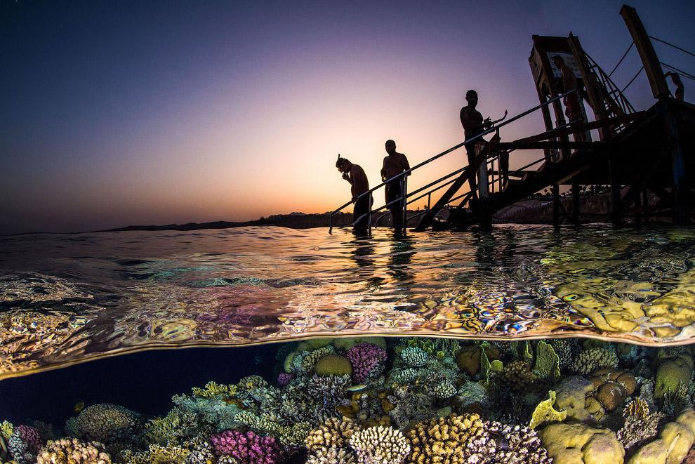 Подводный мир Красного моря, Египет