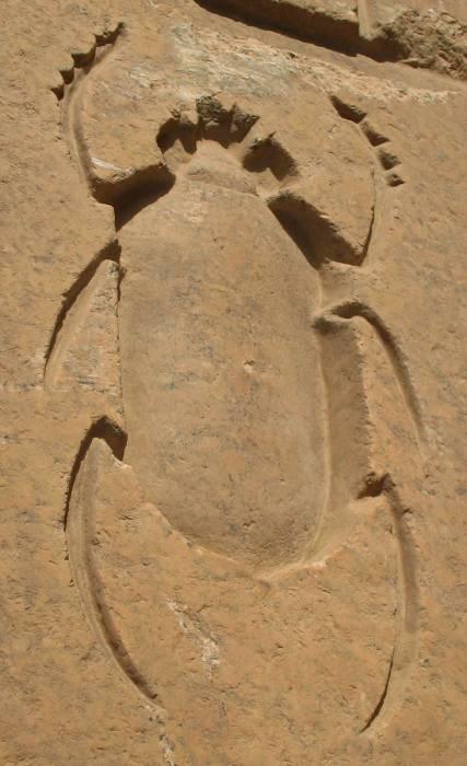 Скарабей. Египет