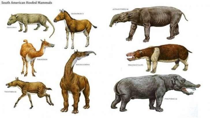 Нестыковки в эволюции: виды есть, а предков нет