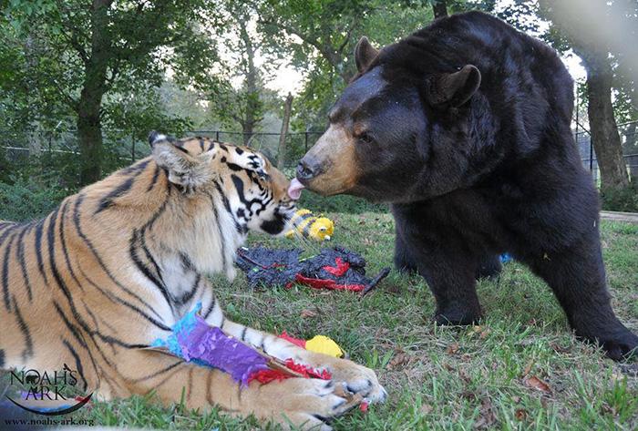 Неразлучное братство медведя, льва и тигра