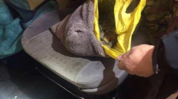 Новости безвиза: украинец вез в Польшу десятки кило янтаря (ФОТО, ВИДЕО) | Русская весна