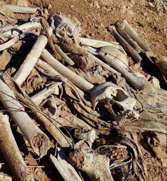 Геноцид в Синджаре: головорезы ИГИЛ убивали курдов всех возрастов — в освобожденном городе обнаружено массовое захоронение (ФОТО 18+) | Русская весна