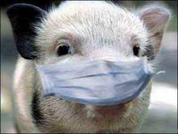 ВОдесской области объявили карантин из-за чумы | Русская весна