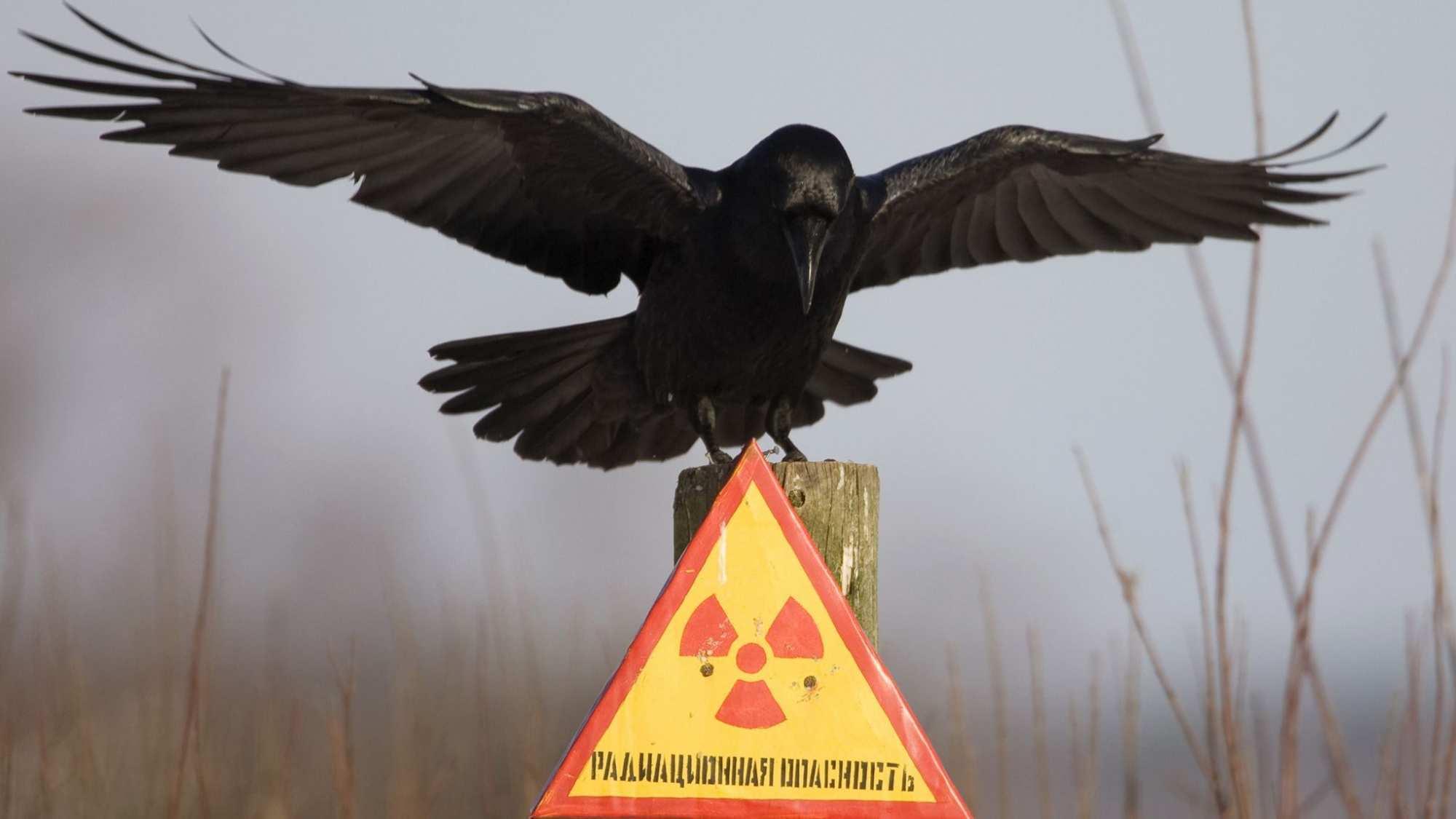 МэрЛьвова предлагает свозить весь украинский мусор вЧернобыль | Русская весна