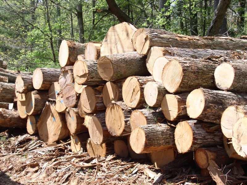 Нелегальная вырубка древесины на Украине вошла в перечень планетарных угроз | Русская весна