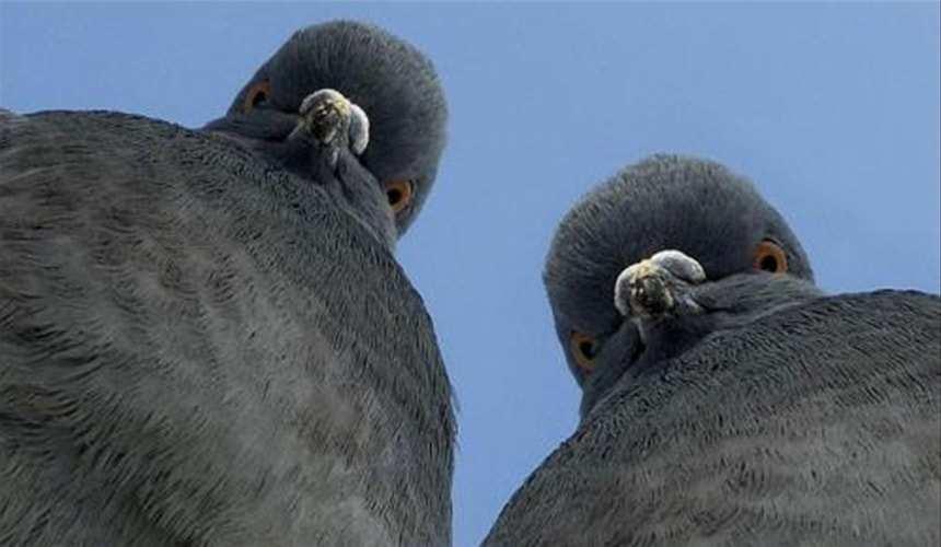 Настоящий голодомор: голодная одесситка отбирала хлеб у голубей (ФОТО) | Русская весна