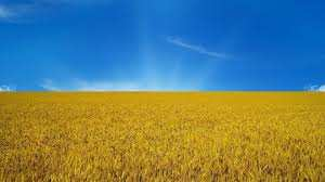 Кому на самом деле принадлежат сельскохозяйственные земли Украины? | Русская весна