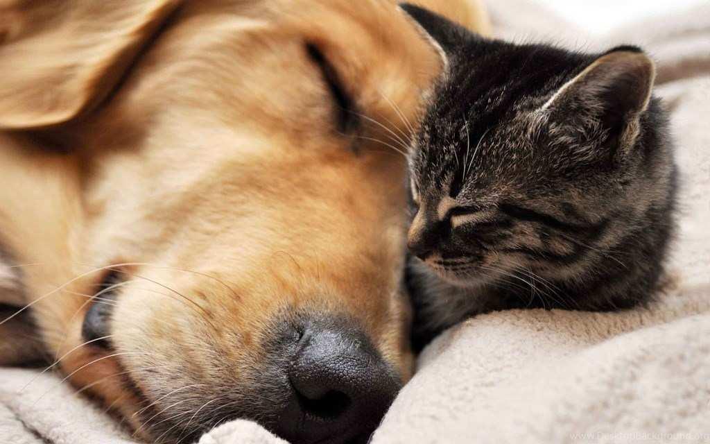Минздрав Украины советует лечиться кошками и собаками | Русская весна