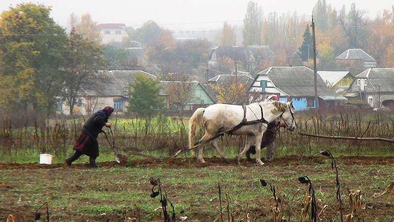Почти Европа: четверть крестьян наУкраине досихпорпашут землю налошадях  | Русская весна