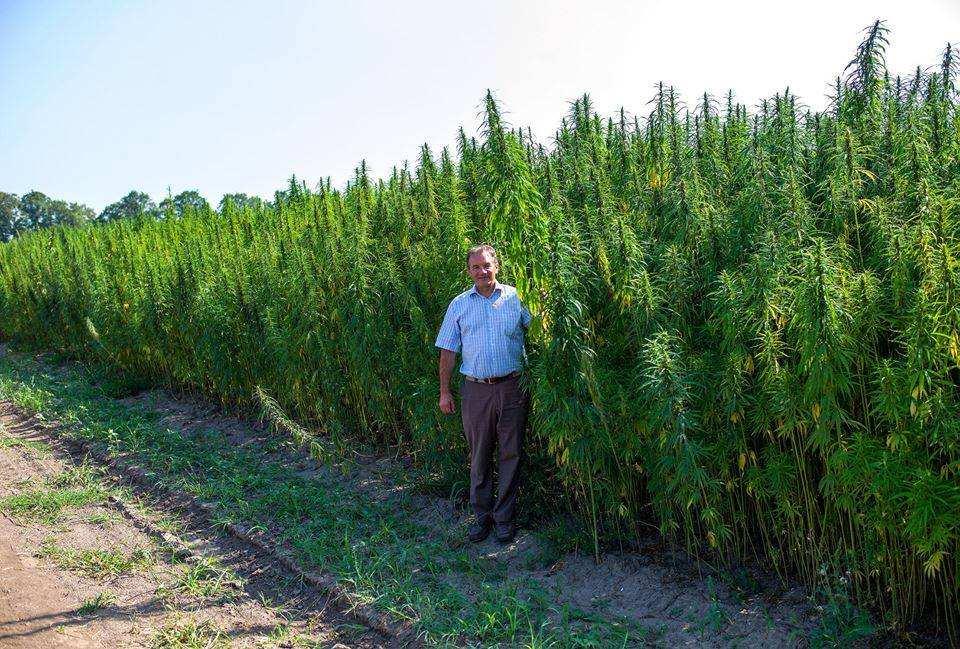 ВСумской области откроют первый наУкраине центр лечения марихуаной | Русская весна