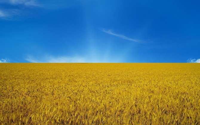 «Аграрная держава Украина» оказалась только мифом | Русская весна
