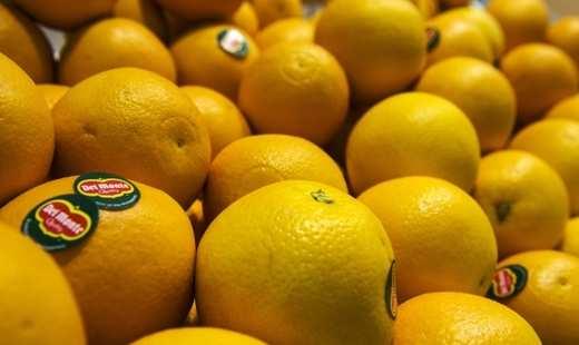 Из порта Латакии в Россию отправилась первая партия сирийских фруктов | Русская весна