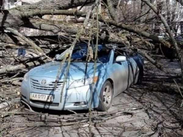 Ураган вХарькове валит деревья,бьет машины и срывает обшивку балконов (ВИДЕО) | Русская весна