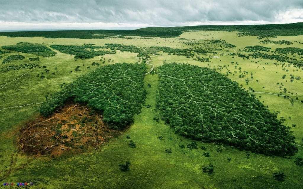 Топорный подход: массовые вырубки леса убивают Украину (ФОТО) | Русская весна