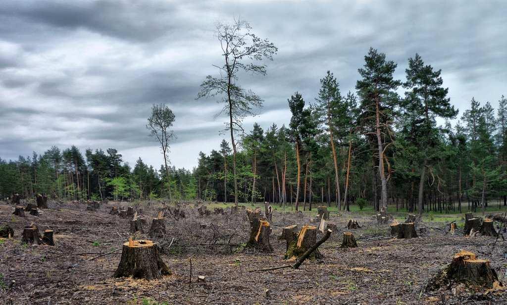 Миллионы от МВФ в обмен на лес-кругляк: на Украине официально признались, что требует Запад | Русская весна