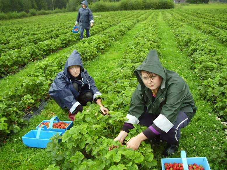 «Не пропали, анашли другую работу», — посол Украины о37украинцах, которые «исчезли» вФинляндии | Русская весна