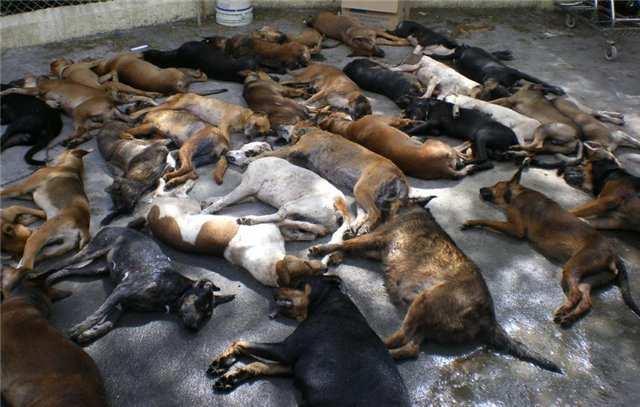 НаВолыни штурмуют скотомогильник — тысячи трупов животных гниют подоткрытым небом (ВИДЕО) | Русская весна