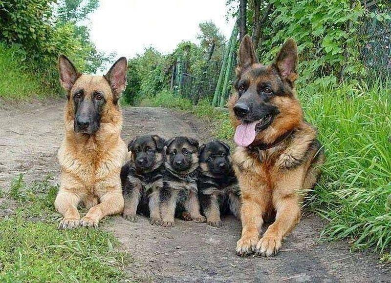 25 трогательных семейных портретов животных. Вот кто по-настоящему ценит свою семью!
