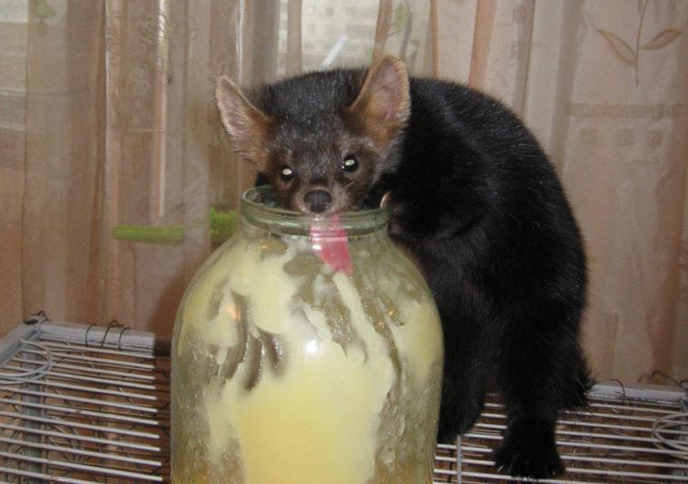 Мужчина подумал, что нашел крысенка в подъезде. Но когда тот подрос… Ничего себе!