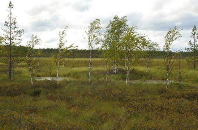 В Архангельской области ученые нашли загадочные отверстия в земле