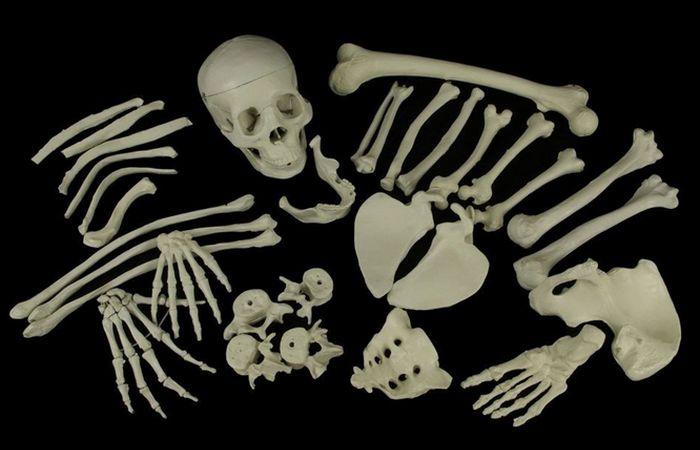 Торговля человеческими костями и скелетами в XIX веке