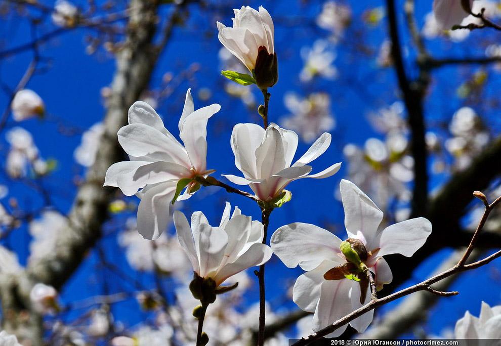 Весна в Крыму