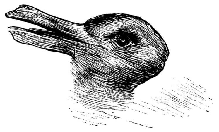 утка и заяц
