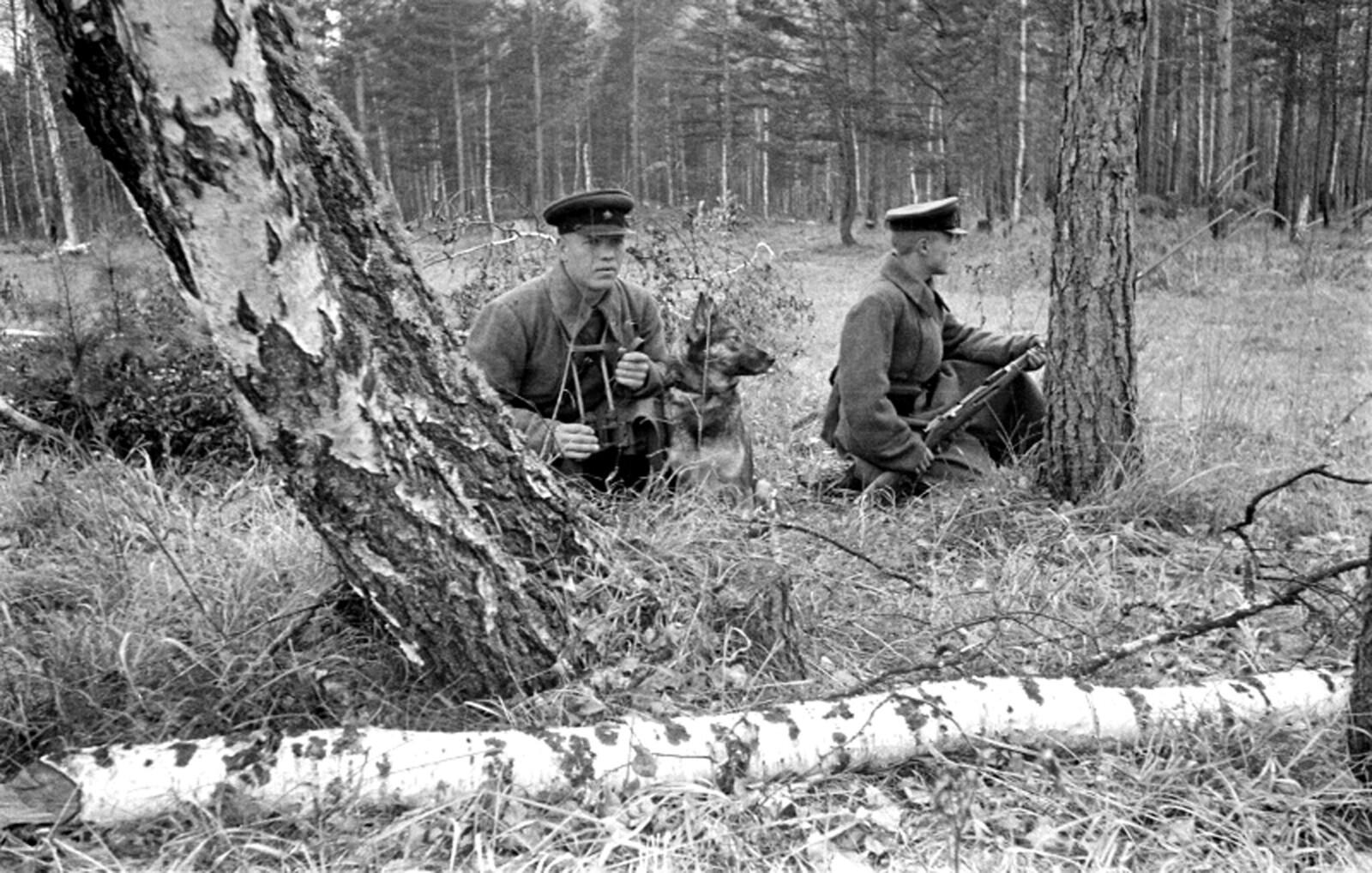 1940-е. (начало). Пограничный наряд со служебной собакой