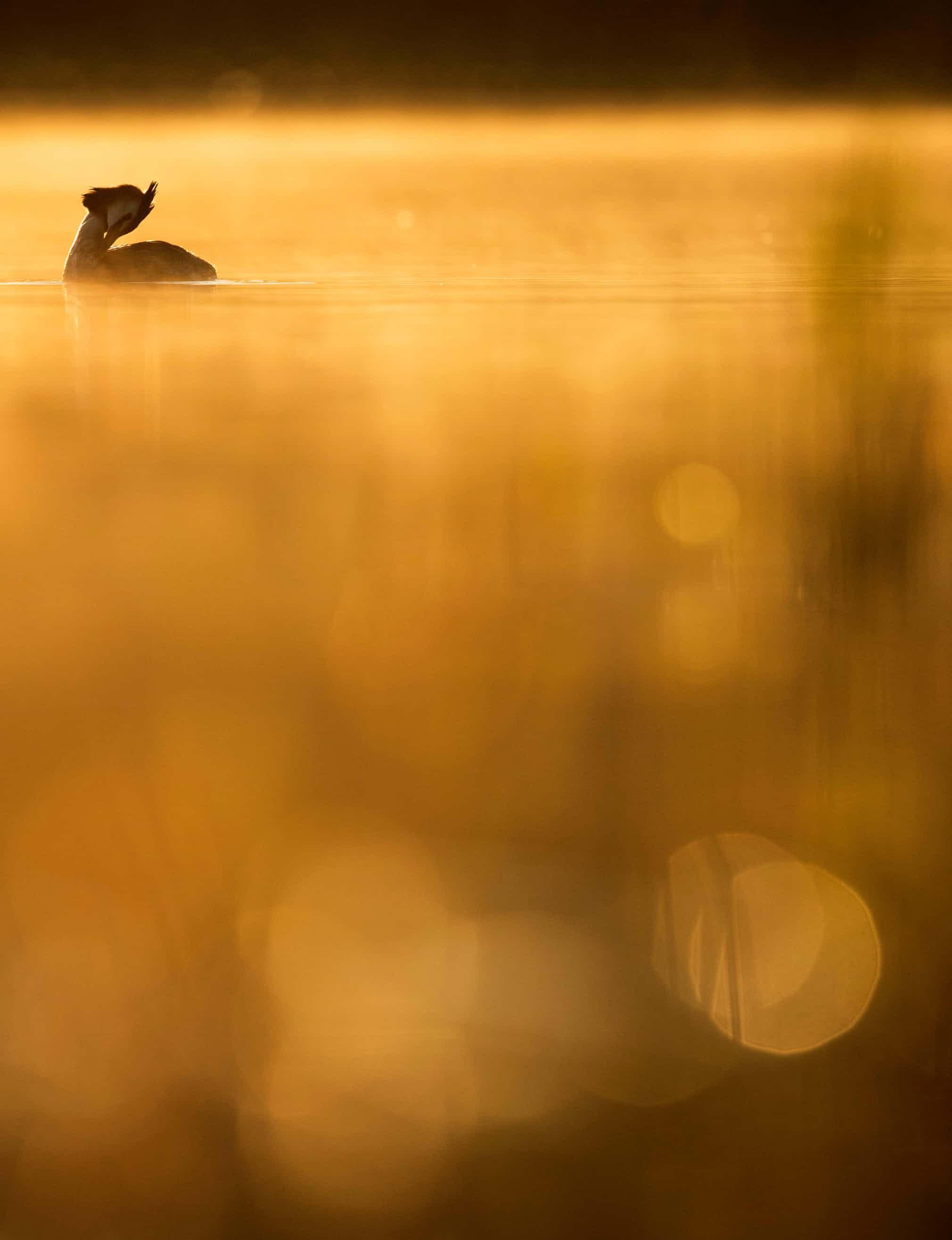 Щведский фотограф Йохан Карлберг победил вкатегории
