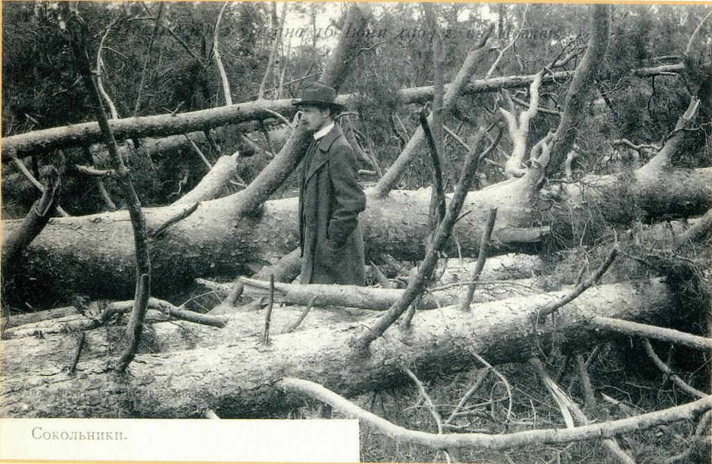 20611 Сокольники после урагана 16 июня 1904 года К. Фишер.jpg