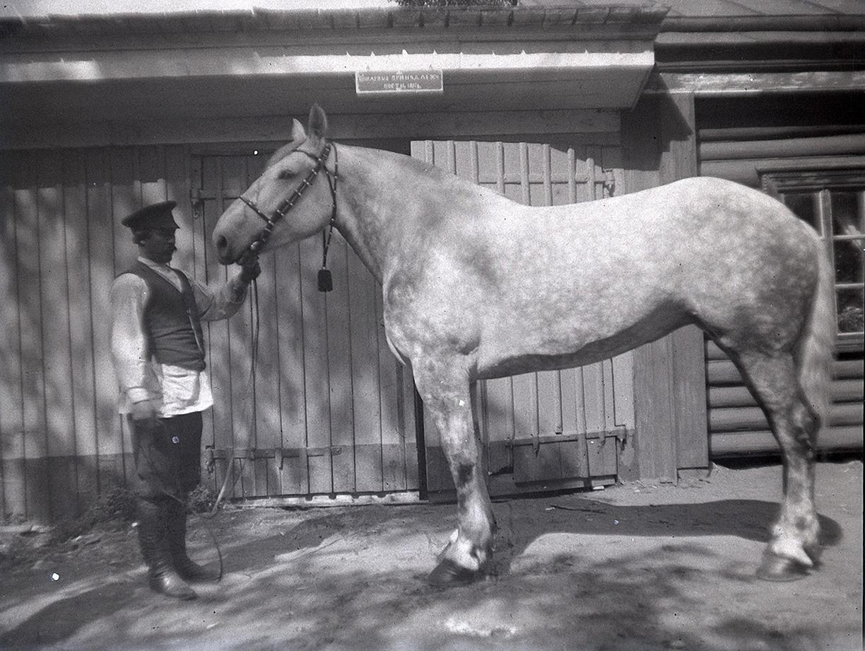 16. 1898. 14 июня. Усадьба И. Ф. Мамонтова «Киреево». Конюх и лошадь в яблоках (2)