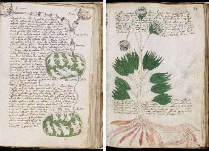 Загадке манускрипта Войнича не менее 500 лет. /Фото: Wikipedia.org