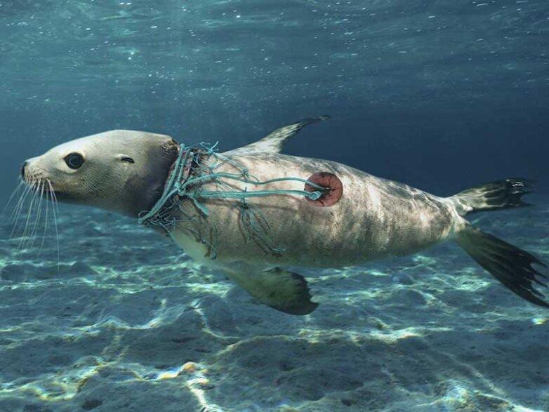 Пластиковое загрязнение Мирового океана
