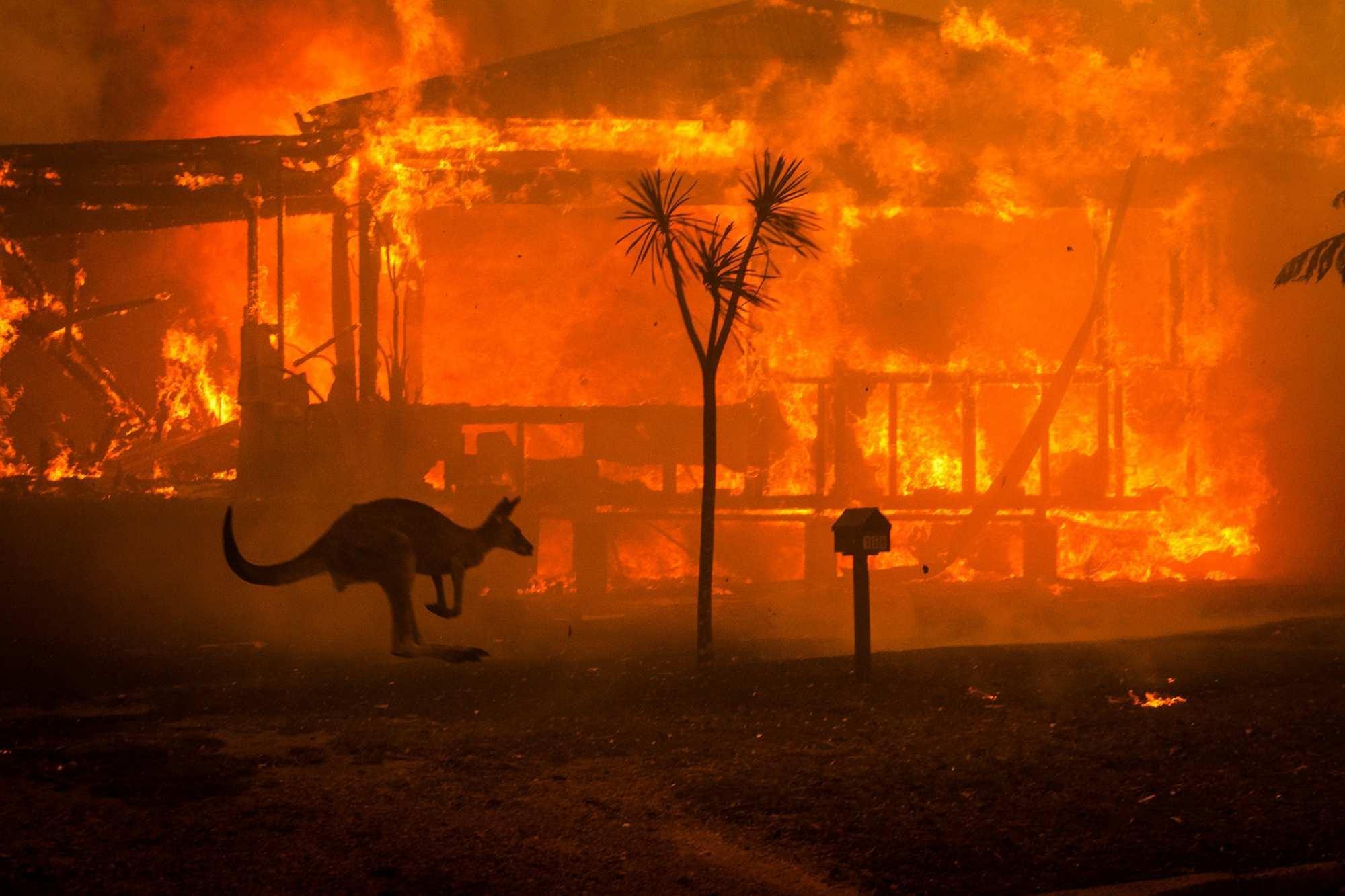 Ад на Земле: увидим ли мы снова Австралию прежней? (ФОТО, ВИДЕО) | Русская весна