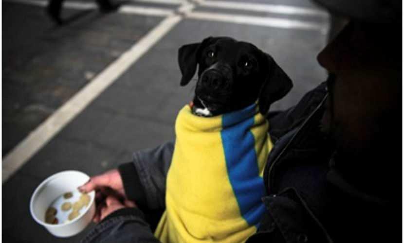 Более 50% украинцев жалуются науменьшение доходов   Русская весна