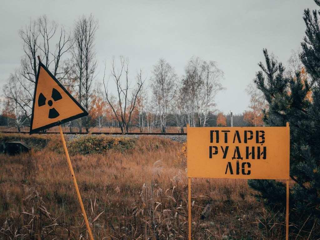 Группа украинцев набрала в Чернобыле 200кг радиоактивной черники напродажу (ВИДЕО) | Русская весна