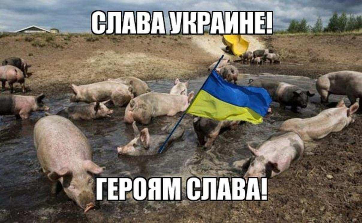 Депутат Рады рассказал о «высшем свинстве» Украины   Русская весна