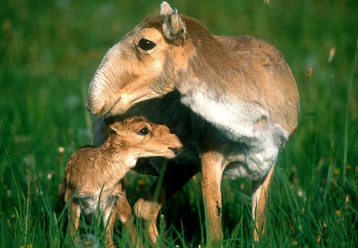 Детеныши редких животных