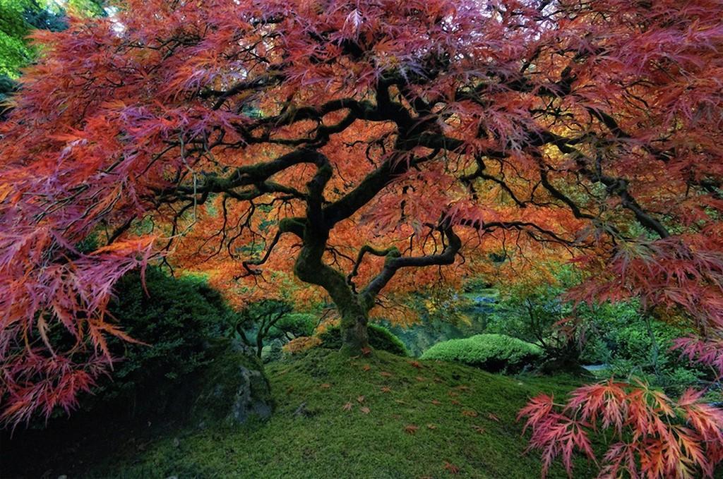 Красивейшие деревья в мире