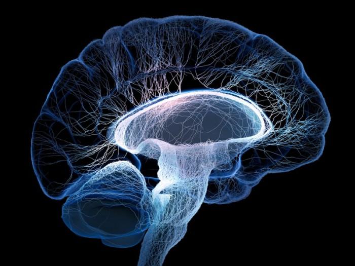 brain-700x525.jpg